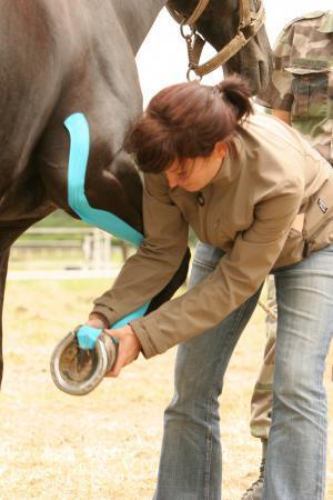 L'EquiK-Taping utilisable par les vétérinaires
